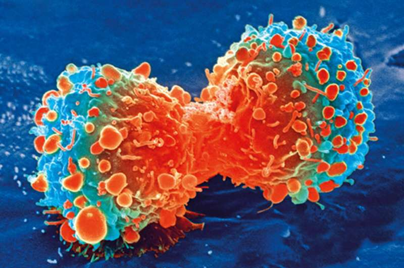 Team reports how gene editing iPS cells can lead to a universal cancer immunotherapy product